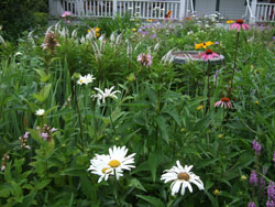 Native Perennial Gardens